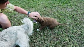 Man playing with cute dogs in nature, slow motion.  stock footage
