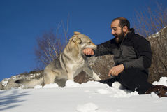 Man playing with dog. Man playing with Czechoslovakian wolf dog Royalty Free Stock Photos