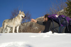 Man playing with dog. Man playing with Czechoslovakian wolf dog Stock Images