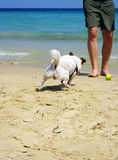 Man playing with dog. At the beach Stock Photography
