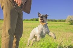 Man playing with the dog. Man playing with dog on the meadow royalty free stock photo