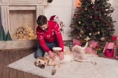 Man playing with dog at christmastime. Handsome young man man playing with golden retriever dog on carpet at christmastime stock image
