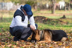 Man Playing With Dog German Shepherd In Park Stock Photo