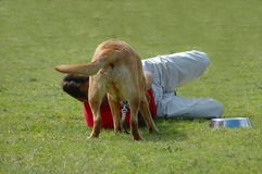 Man playing with dog on grass Royalty Free Stock Images