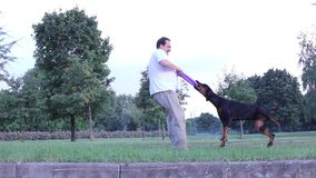 Man playing with dog. Outdoors stock footage
