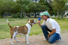 Man playing with dog in park, side view Stock Photo