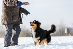 Man is playing with a dog in snow Stock Images