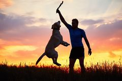 Man is playing with dog Stock Photos
