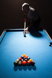 Man playing a game of pool Royalty Free Stock Photography