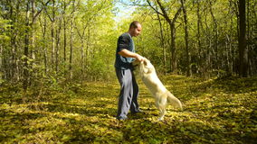Man playing with his dog stock footage
