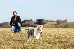 Man is playing with his half breed puppy dog. On a meadow, blue sky in the background royalty free stock photography
