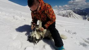 Man playing with husky dog in snow stock video footage