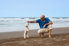 Man playing with dog  at the beach. Man  playing with Maltese dog  at the beach Stock Photo