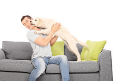 Man playing with a puppy seated on sofa Royalty Free Stock Image