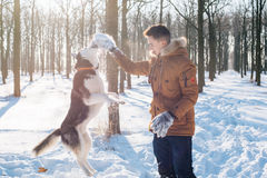 Man playing with siberian husky dog in snowy park. Young caucasian male playing with siberian husky dog in snowy park Stock Photos