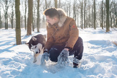 Man playing with siberian husky dog in snowy park Royalty Free Stock Photos