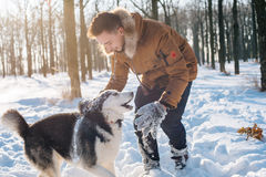 Man playing with siberian husky dog in snowy park. Young caucasian male playing with siberian husky dog in snowy park royalty free stock photography