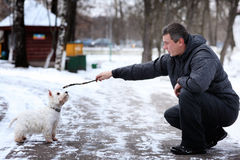 Man playing with a white dog winter snow Stock Images