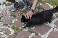 Man plays with a cat at Eho hut. The cat is talisman of the hut royalty free stock photo