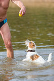 Man plays with a dog in the river Stock Image