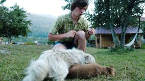 Man plays with puppies and old dogs at the campsite.  stock footage