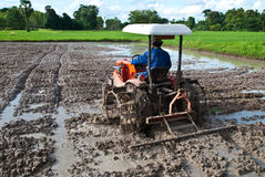 Man with plow truck. Plow truck speeds up work on the mud to prepare the rice paddies Stock Photo