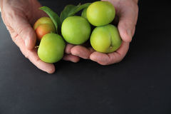 Man with plums on black background Stock Photography