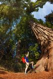 Man pointing at big tree in Redwood California Stock Photos