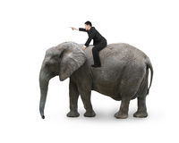 Man with pointing finger gesture riding on walking elephant. Isolated on white royalty free stock images