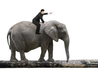 Man with pointing finger riding elephant walking on tree trunk. Man with pointing finger gesture riding elephant walking on tree trunk, isolated on white royalty free stock images