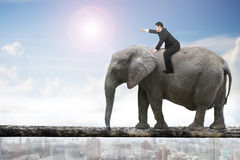 Man with pointing finger riding elephant walking on tree trunk Royalty Free Stock Photo