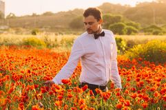 Man in poppy field on the dusk. Countryside Malta royalty free stock photo