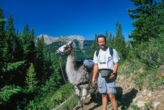 Man Posing with a Llama on a High Mountain Trail Stock Image