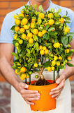 Man with potted plant. Stock Image