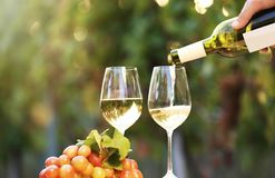 Man pouring white wine into glass. On table outdoors stock photography