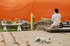 Man praying at buddhist shrine ayutthaya thailand Royalty Free Stock Image