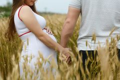 Man and pregnant woman standing in wheat field on a background. Close up. a man holds a woman by the hand royalty free stock photo