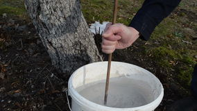 Man prepare fruit tree whitewash fluid protect vermin bucket. Man preparing fruit tree whitening lime fluid help for protect from vermin pest in white bucket stock footage