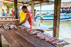 Man prepares fish, Livingston, Guatemala Royalty Free Stock Photography