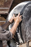 Man preparing horse for working Royalty Free Stock Photography