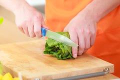 Man preparing vegetables salad cutting lettuce Royalty Free Stock Image