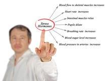 Stress Hormones. Man presenting Influence of Stress Hormones Stock Photo