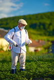 Man in protective clothes spraying insecticide on potatoes. Plants Royalty Free Stock Photography