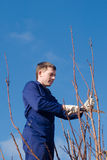 Man pruning branches with the saw. Young man  pruning apricot branches with the saw Royalty Free Stock Photos