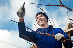 Man pruning brunches with the pruner. Portrait of young man  pruning apricot brunches with the pruner Royalty Free Stock Image