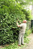 Man pruning a hedge Stock Photo