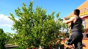 Man pruning a lemon tree (4K) stock video footage