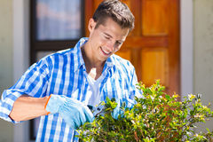 Man pruning shrub Royalty Free Stock Image