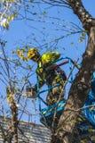 Man pruning a tree Stock Photos