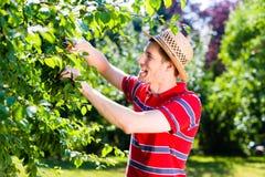 Man pruning tree in garden Royalty Free Stock Image